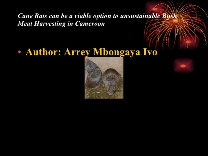 Cane Rats Can Be A Viable Option To Bush Meat Harvesting..By Arrey Mbongaya Ivo