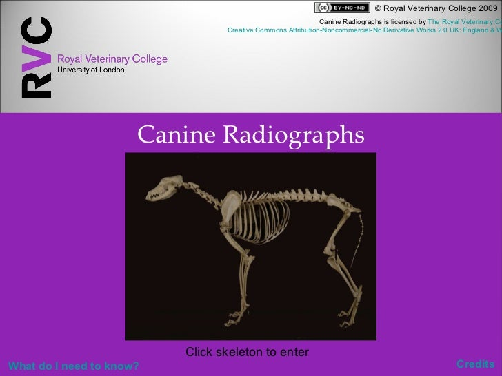 Canine Radiographs Click skeleton to enter   Credits Canine Radiographs is licensed by  The Royal Veterinary College  unde...