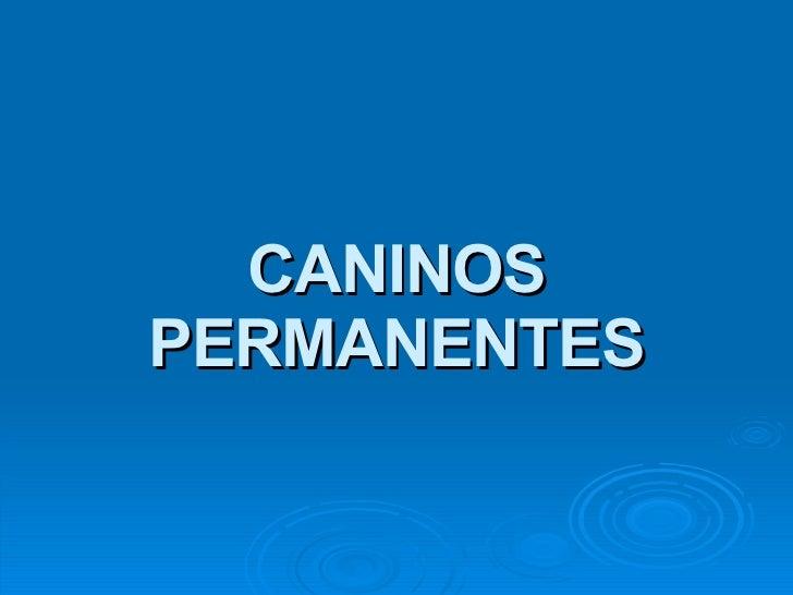 CANINOS PERMANENTES