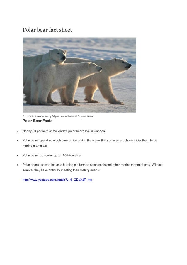 Polar bear fact sheetCanada is home to nearly 60 per cent of the worlds polar bears.Polar Bear Facts Nearly 60 per cent o...