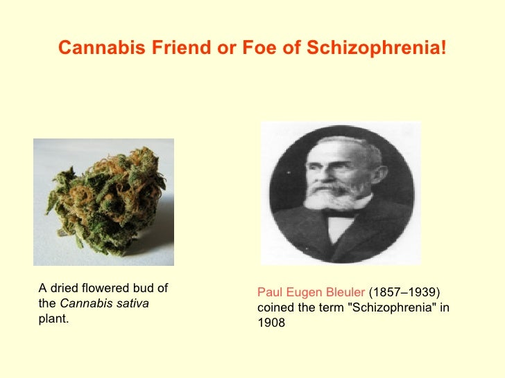 Cannabis Friend or Foe of Schizophrenia! A dried flowered bud of the  Cannabis sativa  plant.  Paul  Eugen   Bleuler  (185...
