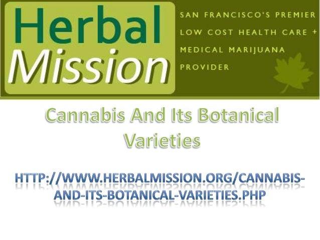 Choose Your Favorite Topic To ReadA. MEDICAL MARIJUANAB. BOTANY OF CANNABISC. SAN FRANCISCO INDICAD. SAN FRANCISCO SATIVAE...