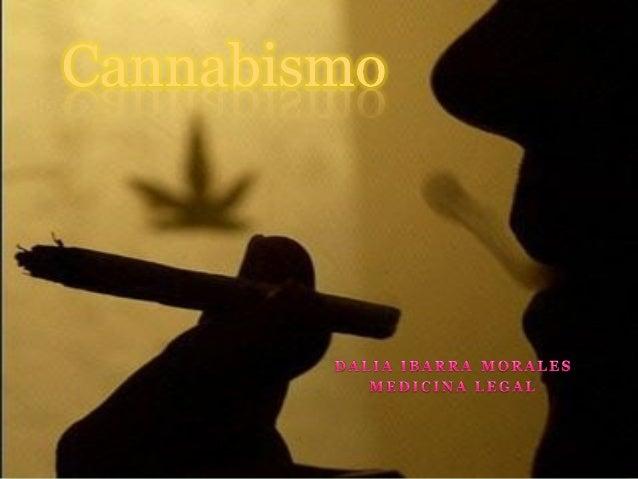 MarihuanaSituación en MéxicoEl informe apunta que Méxicoaseguró mil 893 toneladas demarihuana en el 2006.Indica que cerca ...