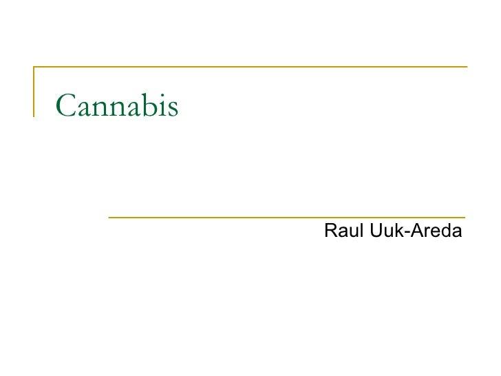 Cannabis Raul Uuk-Areda