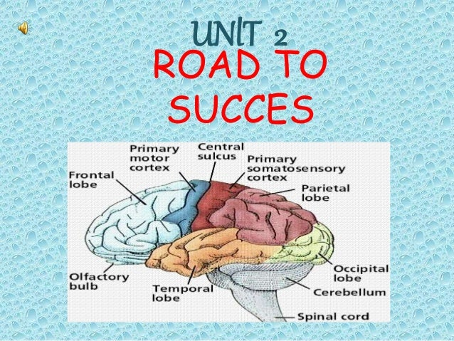 ROAD TO SUCCES Study skılls UNlT 2