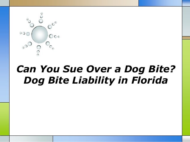 Can you sue over a dog bite dog bite liability in florida