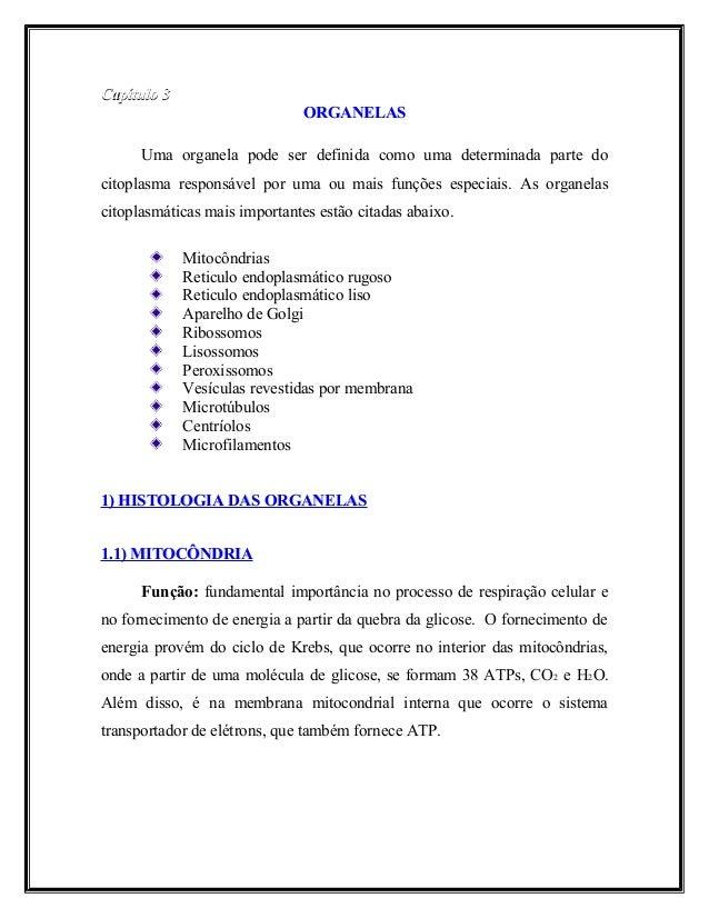 Capítulo 3Capítulo 3 ORGANELASORGANELAS Uma organela pode ser definida como uma determinada parte do citoplasma responsáve...