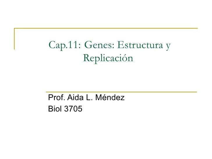 Cap.11:   Genes: Estructura y Replicación  Prof. Aida L. Méndez Biol 3705