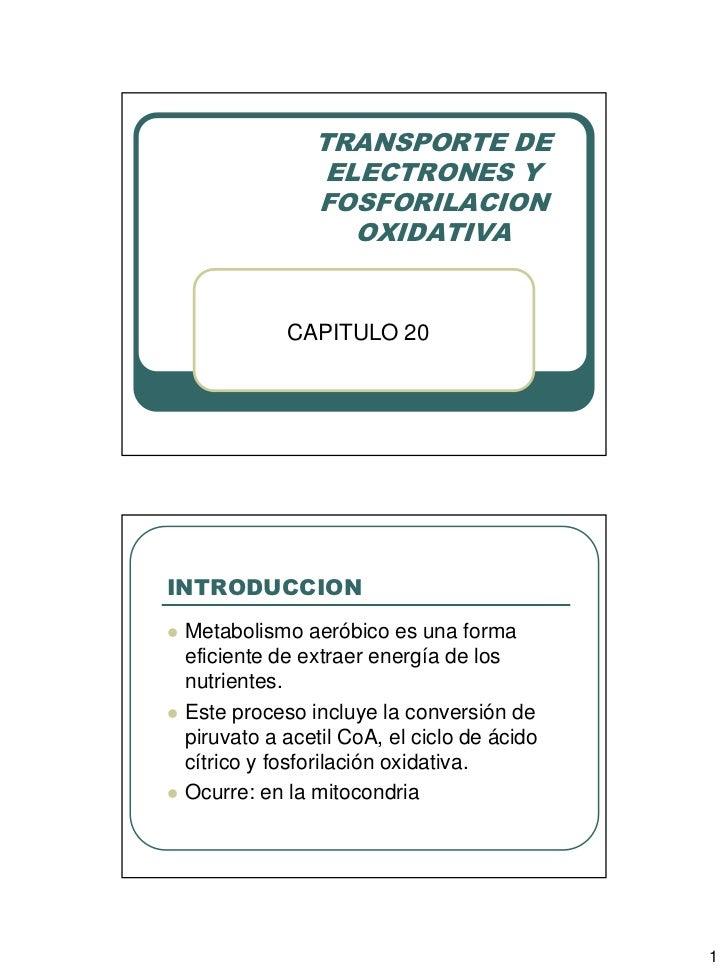 TRANSPORTE DE                   ELECTRONES Y                  FOSFORILACION                     OXIDATIVA               CA...