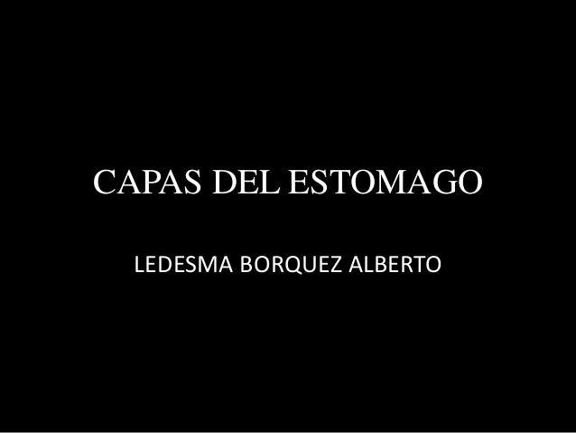 CAPAS DEL ESTOMAGO  LEDESMA BORQUEZ ALBERTO