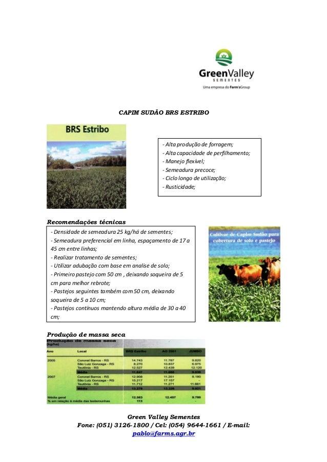 CAPIM SUDÃO BRS ESTRIBO Recomendações técnicas Produção de massa seca Green Valley Sementes Fone: (051) 3126-1800 / Cel: (...