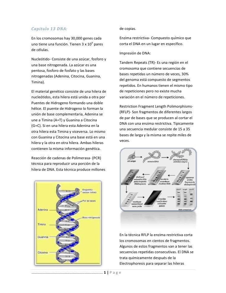 Capitulo 13 DNA:                                                                de copias.En los cromosomas hay 30,000 gen...