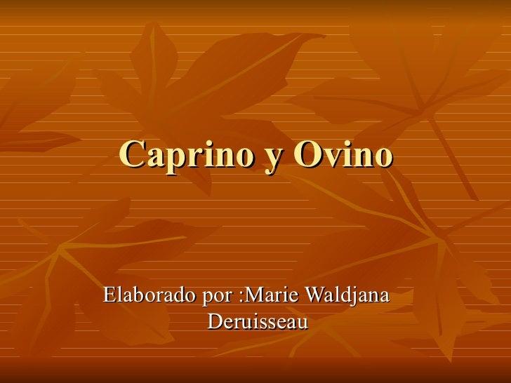 Ovino y Caprino  <ul><li>Elaborado por :Marie Waldjana  Deruisseau </li></ul>Elaborado por :Marie Waldjana Deruisseau, est...