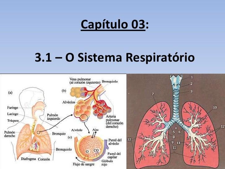 Capítulo 03:3.1 – O Sistema Respiratório
