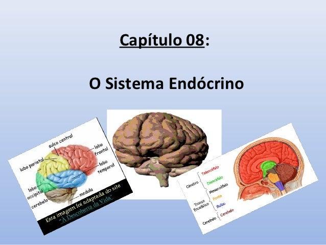 Capítulo 08:O Sistema Endócrino