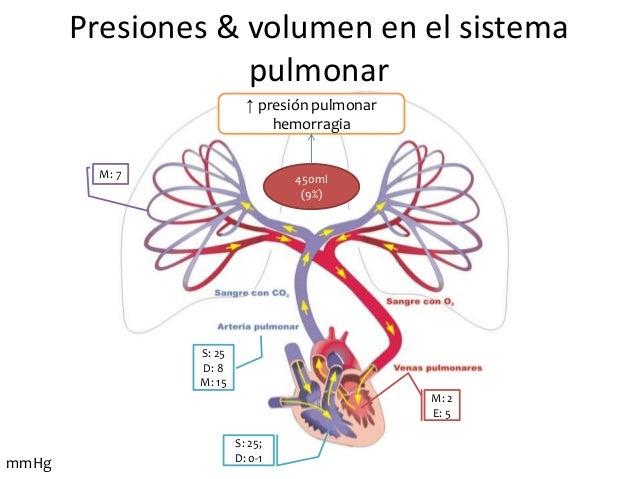 Circuito Pulmonar : Circuito circulatorio pulmonar unidad circulacion