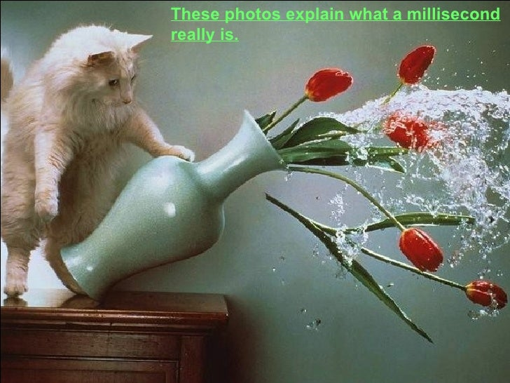 These photos explain what a millisecond really is.