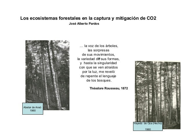 Hayedo de Oza (Hecho)1960… la voz de los árboles,las sorpresasde sus movimientos,la variedad de sus formas,y hasta la sing...