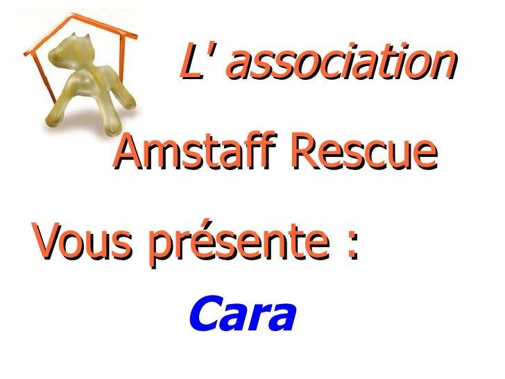 L' association   Amstaff Rescue Vous présente : Cara