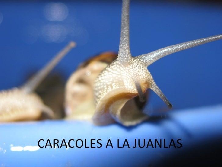 CARACOLES A LA JUANLAS