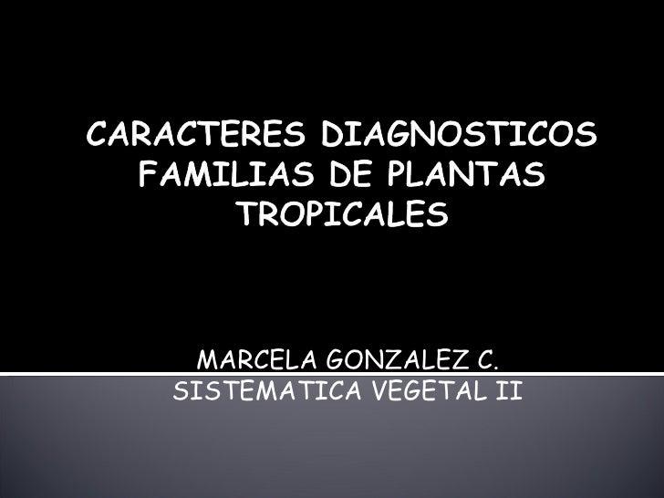 Caracteres Diagnosticos Familias De Plantas Tropicales