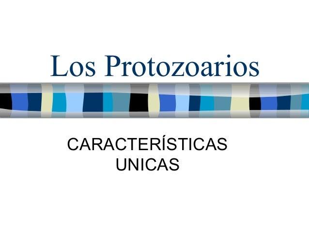 Los Protozoarios CARACTERÍSTICAS UNICAS