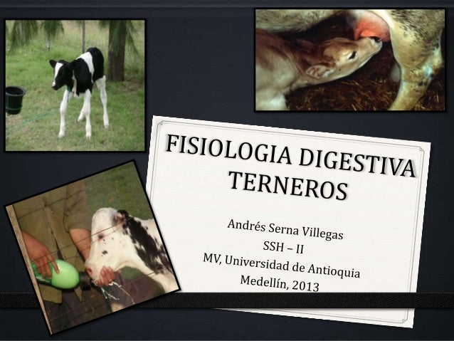 Caracterización Animal1. Desarrollo Anatómico y Enzimático del   rumen (Fase Posnatal)2. Desarrollo Papilas Ruminales3. Co...