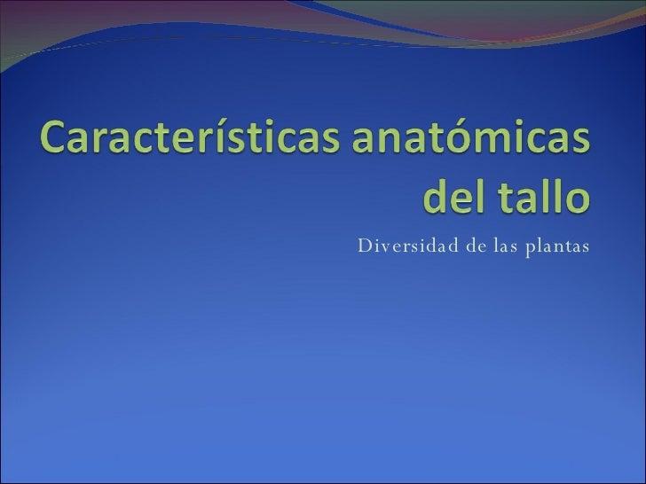 CaracteríSticas Anatomicas Del Tallo