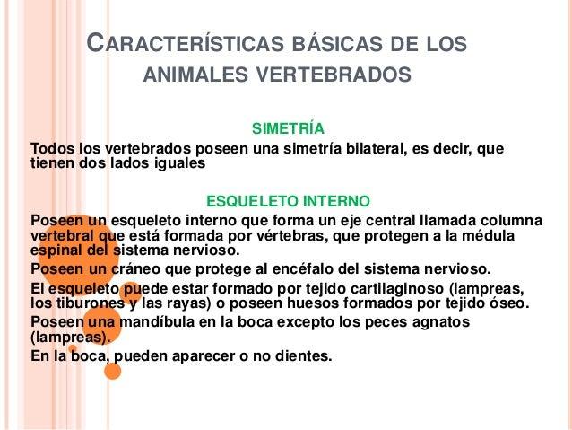CARACTERÍSTICAS BÁSICAS DE LOS               ANIMALES VERTEBRADOS                             SIMETRÍATodos los vertebrado...