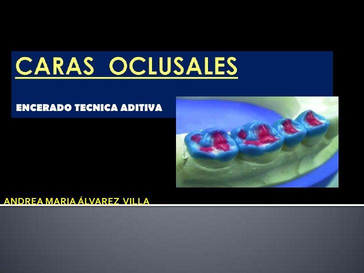 CARAS  OCLUSALES<br />ENCERADO TECNICA ADITIVA<br />ANDREA MARIA ÁLVAREZ  VILLA<br />