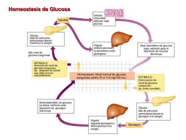 dieta para ciclo de primobolan y winstrol