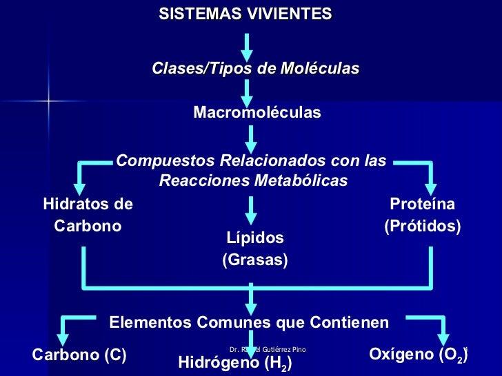 Proteinas Grasas y Lipidos Lípidos Grasas Proteína