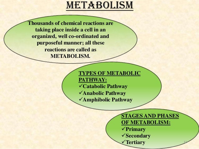 anabolic pathways of metabolism are pathways that