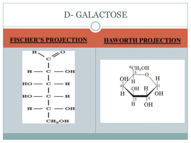 Alpha D Galactose Fischer Projection Carbohydrates