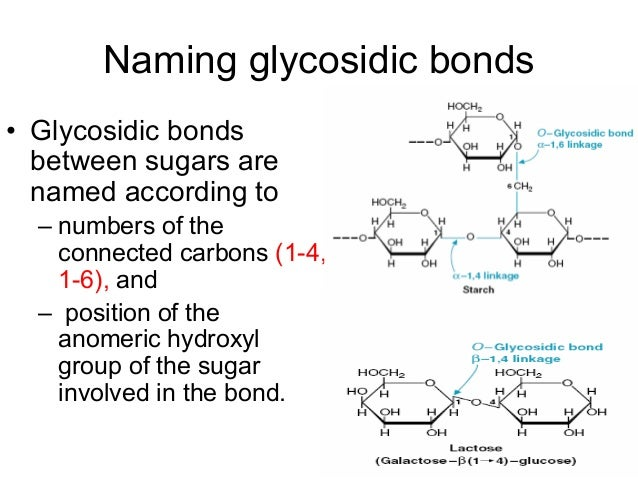 N Glycosidic Bond Carbohydrate structure