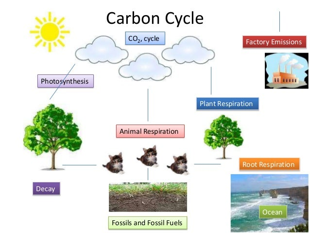 Carbon Cycle Co2 Cycle