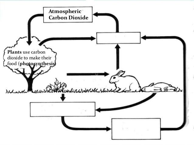 Biogeochemical Cycle Worksheet | Worksheet & Workbook Site