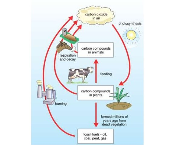 Images Of Carbon Cycle Diagram Gcse Golfclub