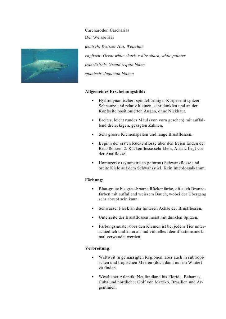 Carcharodon Carcharias Der Weisse Hai deutsch: Weisser Hai, Weisshai englisch: Great white shark, white shark, white point...