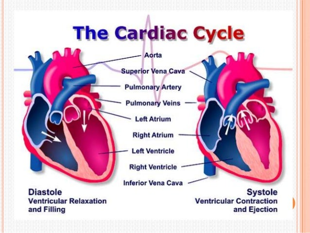 phases of a cardiac cycle Cardiac cycle is the complete sequence of the heart's contractions that results in  ejecting blood from the heart to the lungs and body each cardiac cycle.