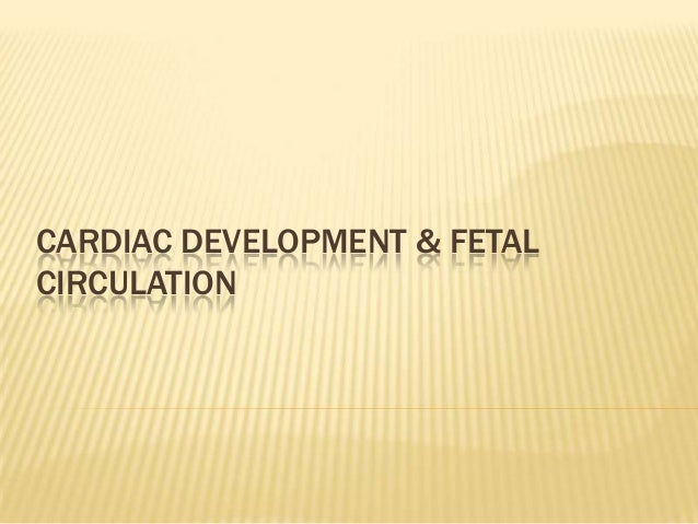 CARDIAC DEVELOPMENT & FETAL CIRCULATION