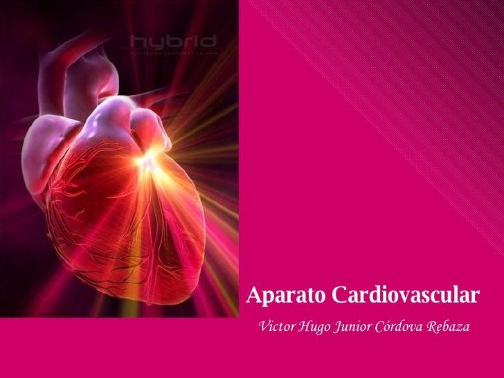 Aparato Cardiovascular Victor Hugo Junior Córdova Rebaza