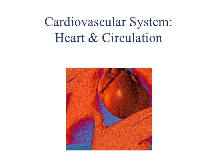 Cardiovascular System: Heart & Circulation