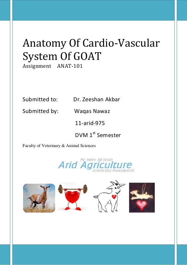 Anatomy Of Cardio-VascularSystem Of GOATAssignment        ANAT-101Submitted to:              Dr. Zeeshan AkbarSubmitted by...