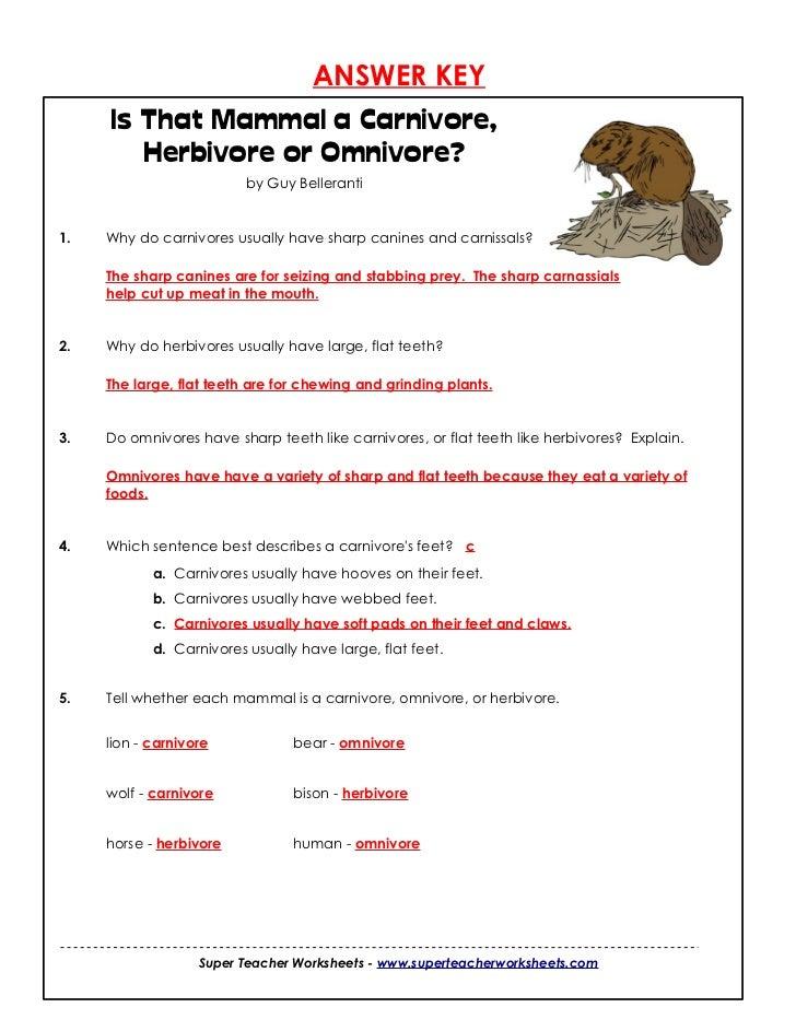 All About Carnivore Herbivore Omnivore Esol Help Kidskunstfo