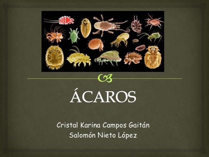 Cristal Karina Campos Gaitán    Salomón Nieto López