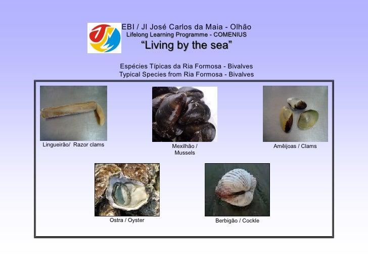 EBI / JI José Carlos da Maia - Olhão                                 Lifelong Learning Programme - COMENIUS               ...