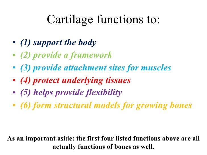 Cartilage functions to: <ul><li>(1) support the body </li></ul><ul><li>(2) provide a framework </li></ul><ul><li>(3) provi...