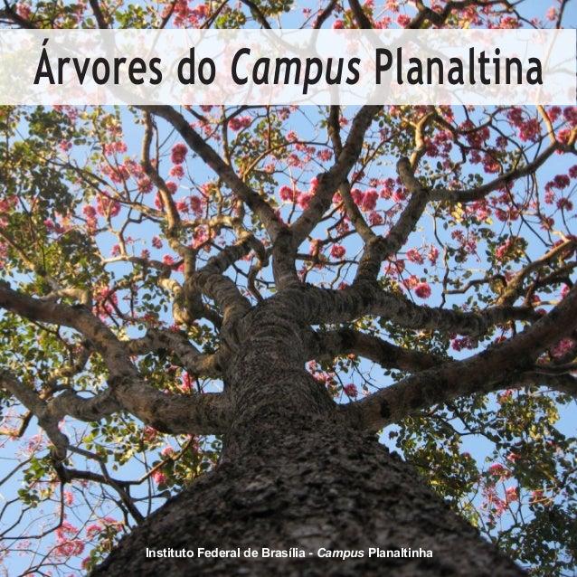 Instituto Federal de Brasília - Campus Planaltinha Árvores do Campus Planaltina