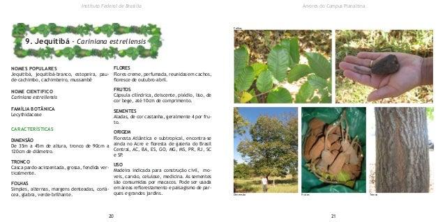 NOMES POPULARES Jequitibá, jequitibá-branco, estopeira, pau- de-cachimbo, cachimbeiro, mussambê NOME CIENTIFICO Cariniana ...